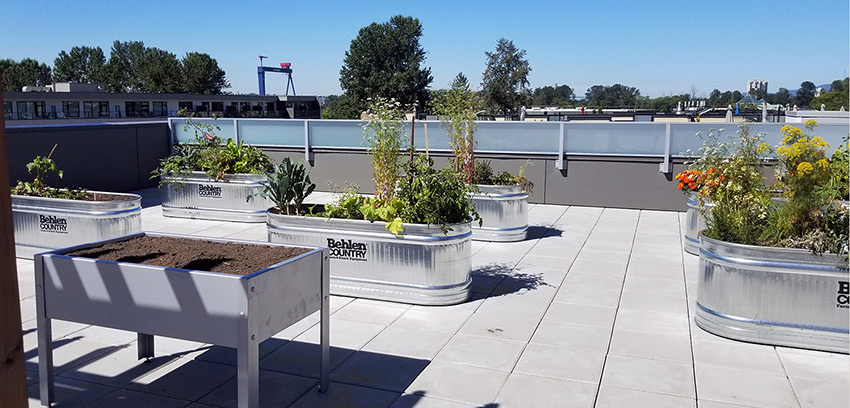roof deck of five point residential vancouver architecture